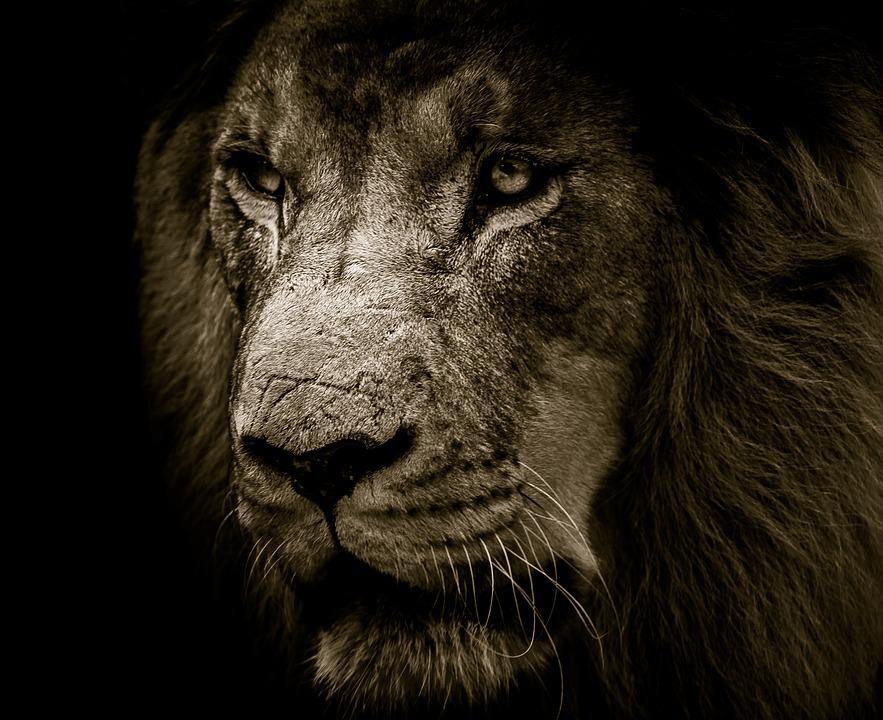 thy king cometh kingdom of priest